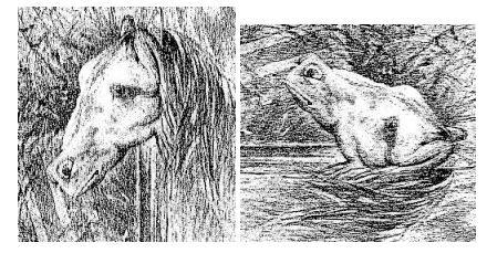 Arklys ar varlė?